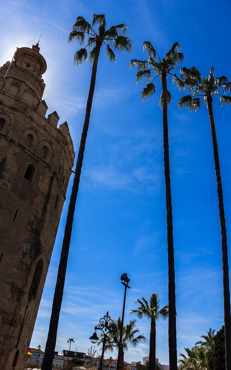 Torre del Oro con palmeras para el paso de Las Cigarreras