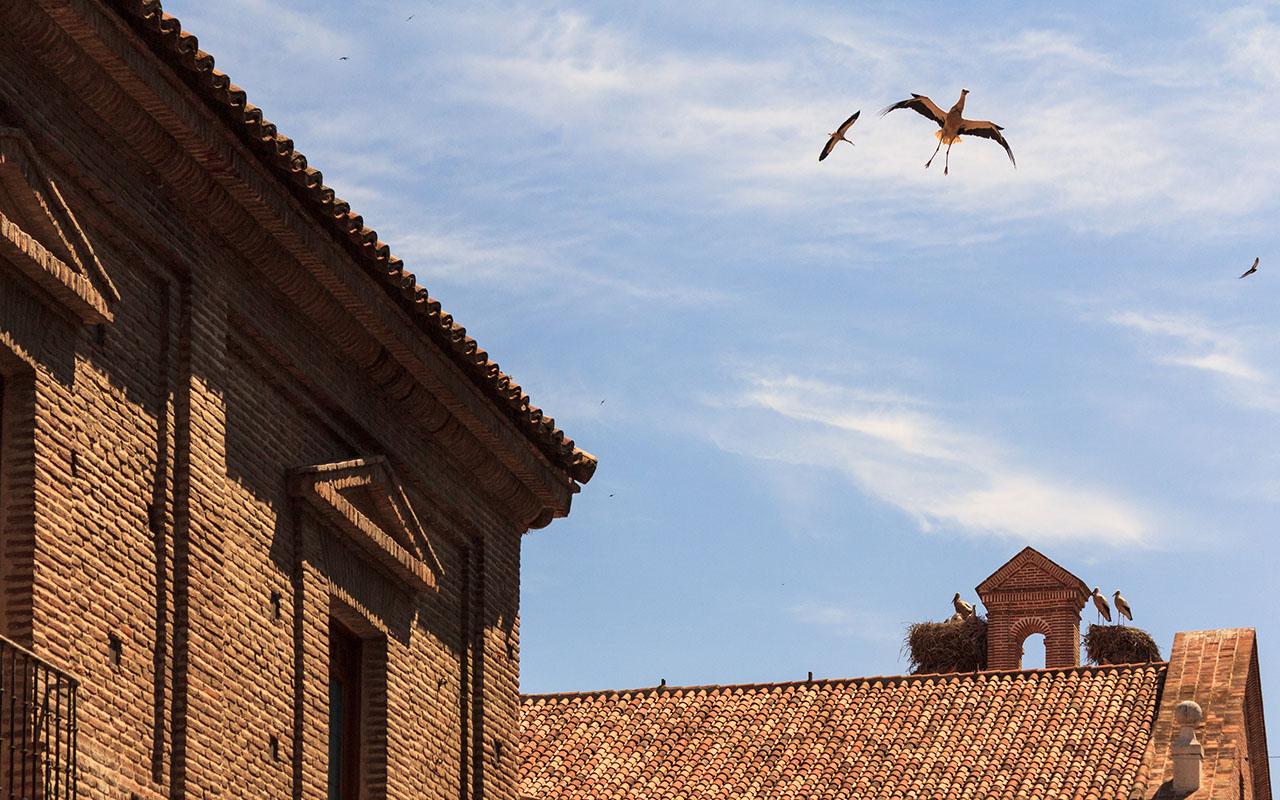 Cigüeñas sobrevolando la ciudad