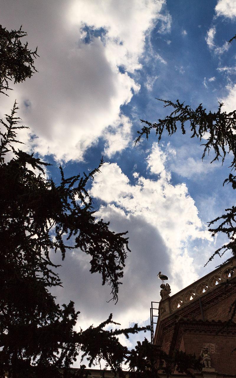 Vigía con alas. Alcalá de Henares, 2015 ©Flivillegas